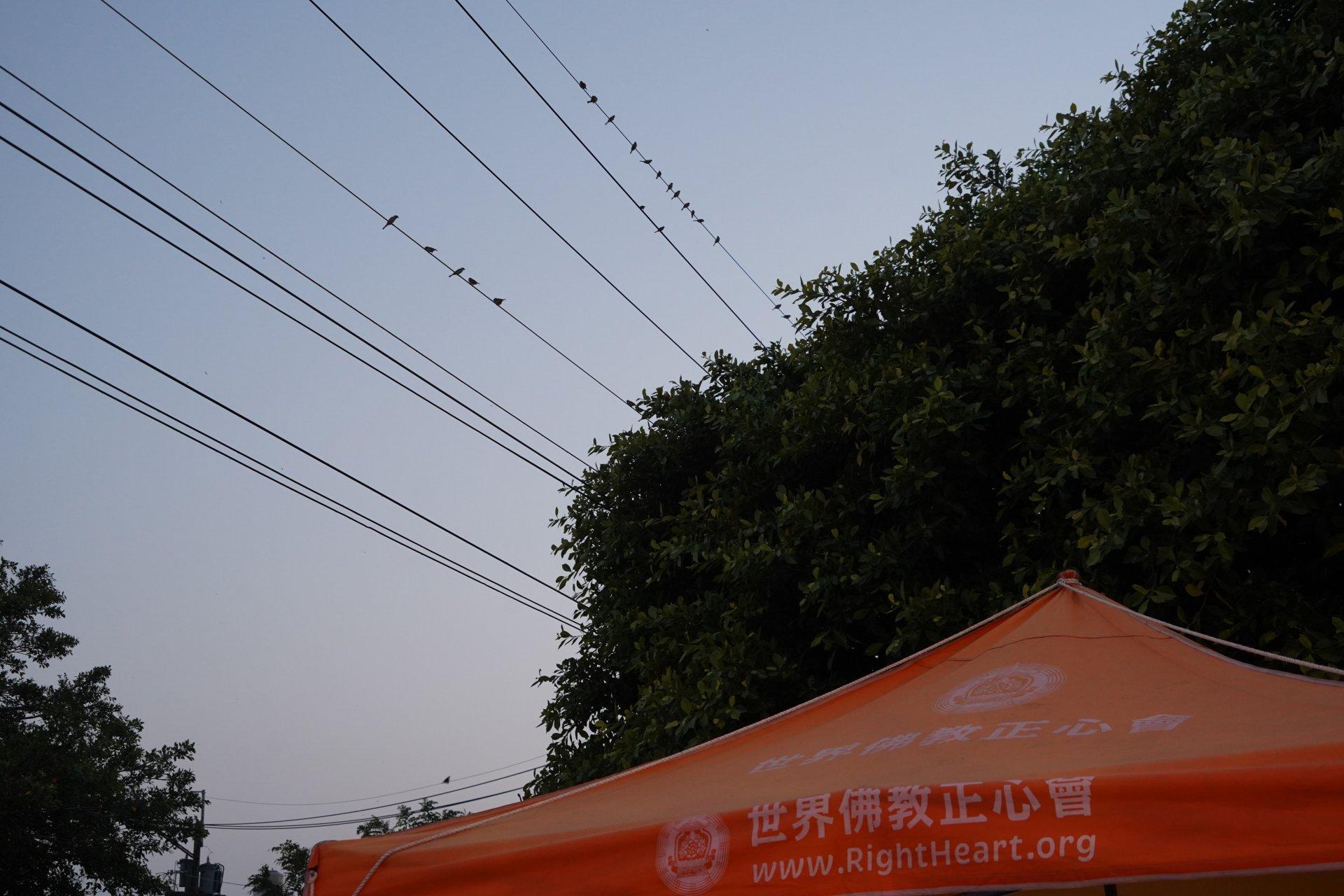 行動佛殿129站高雄永安,周末藝文晚會熱鬧的氣氛小鳥都來看表演